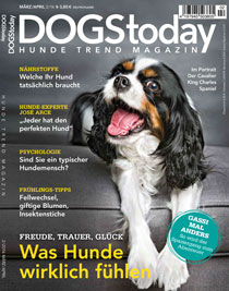 catstoday-magazin.de